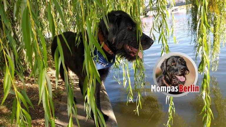 Mompas Berlin Hat Jemand Unseren Ball Gesehen Hunde Berlin Erlebnis