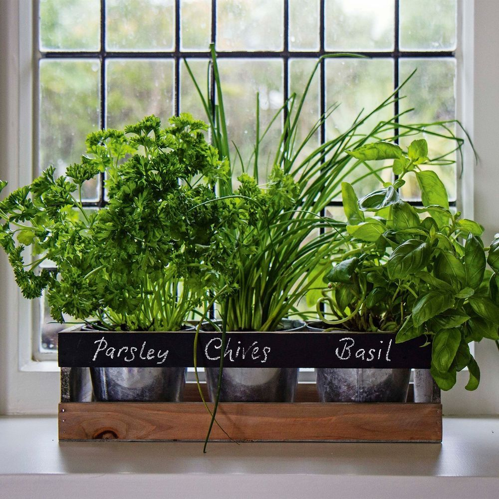 Garden Planter Box Wooden Indoor Herb Kit Kitchen Seeds Windowsill