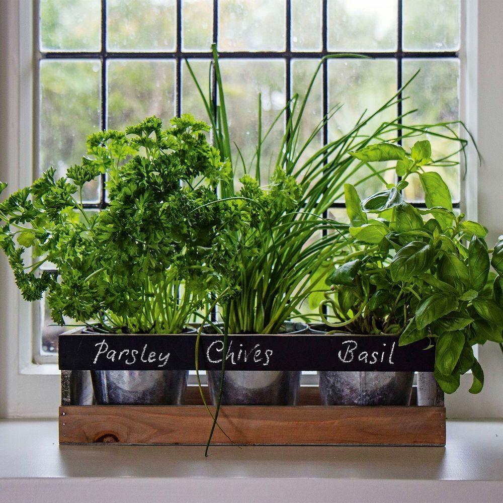 kitchen herb kit island with butcher block top garden planter box wooden indoor seeds windowsill pots window
