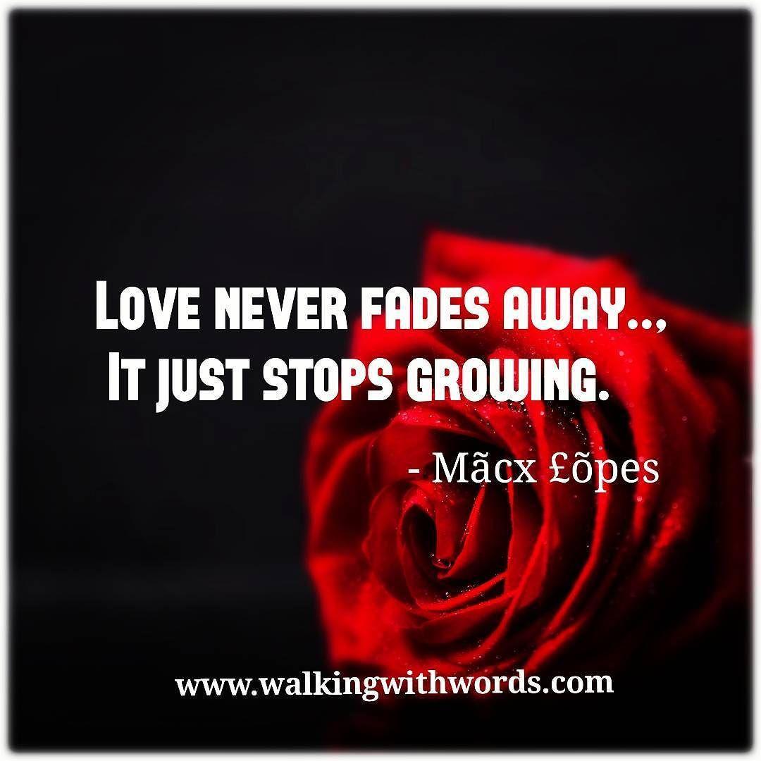 Love never fades walkingwithwords love pain return