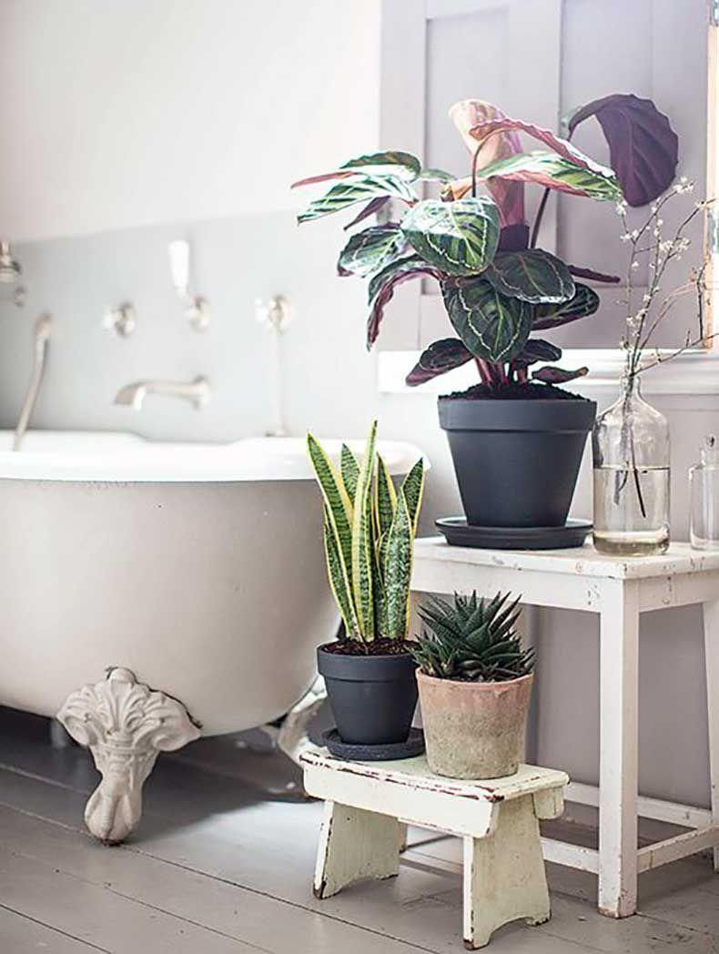 Des plantes vertes dans la salle de bain baignoire sur for Salle de bain baignoire pied de lion