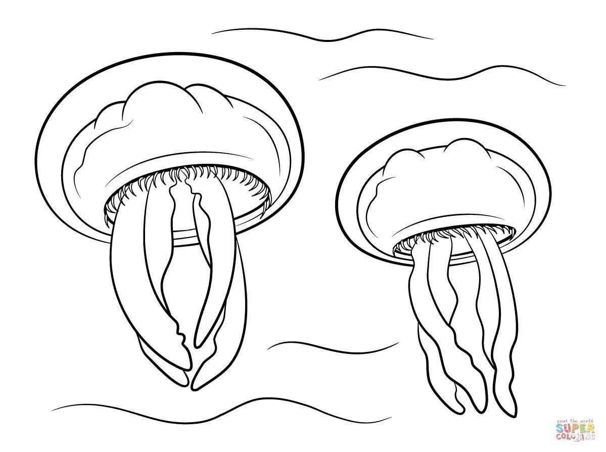 18 Coloring Pages Jellyfish Coloring Pages Jellyfish Print Jellyfish Drawing