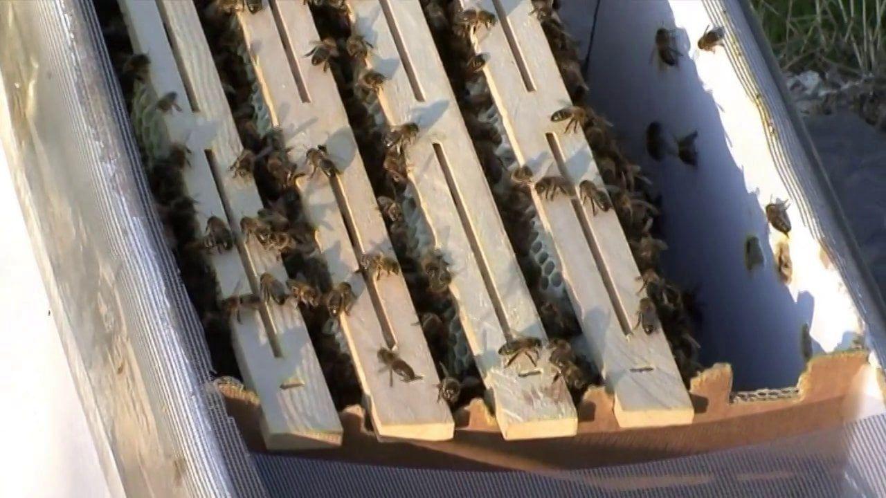 Intelligent Beehives