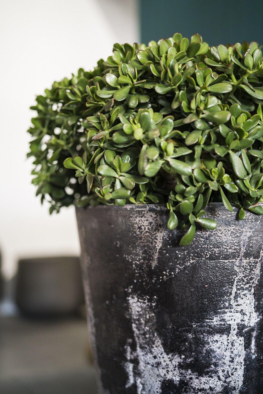 Woodfired pots ©Garden Life Garden, Pot, Outdoor plants