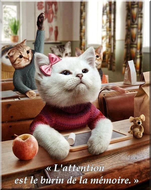 """Résultat de recherche d'images pour """"rentrée des classes chats"""""""