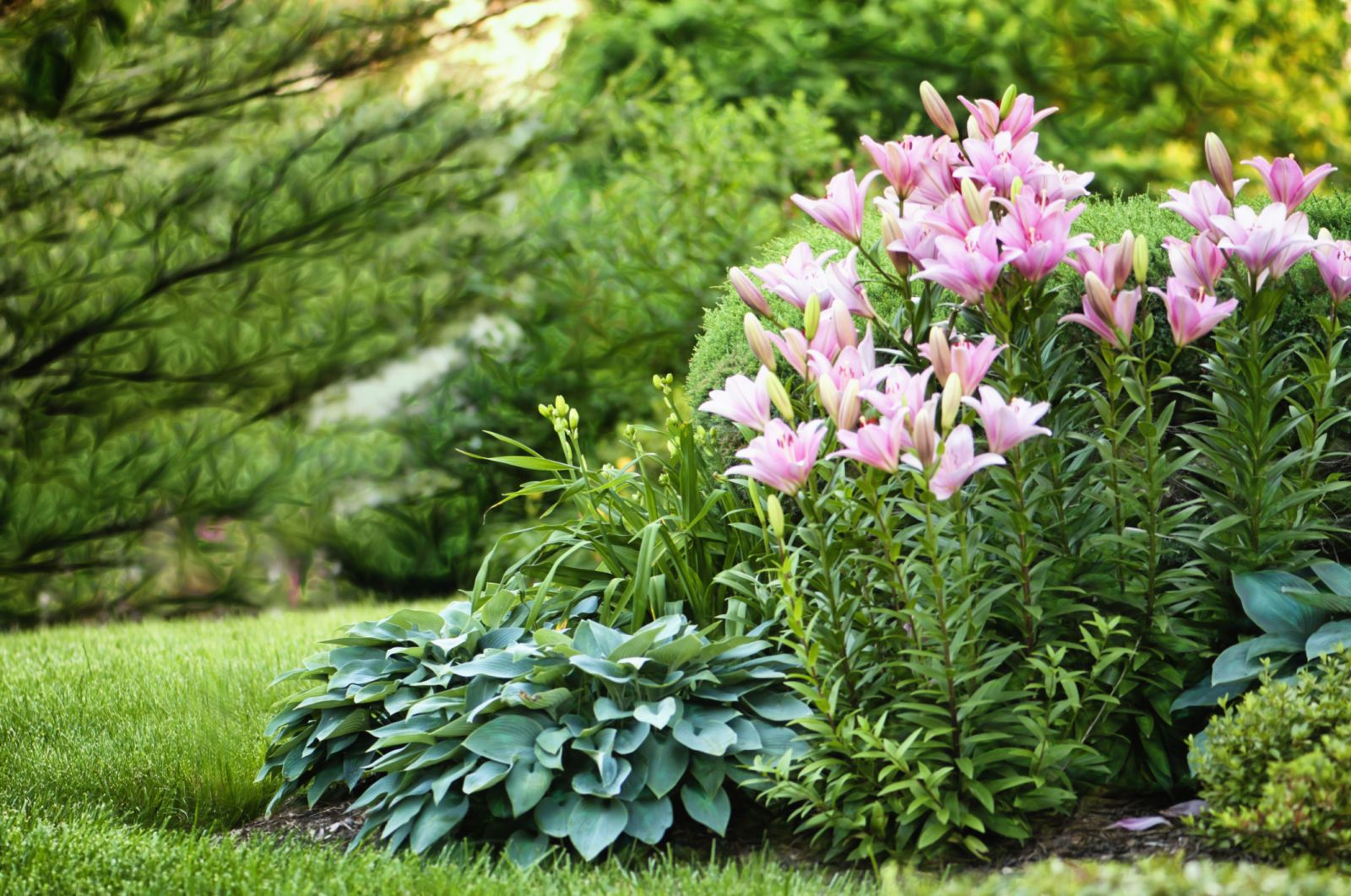 8 Surprising Things You Didn't Know About Lilies  - Veranda.com