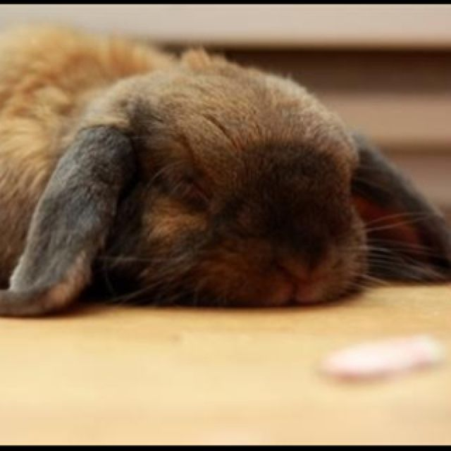 Sleepy head...reminds me of my cute roommate!