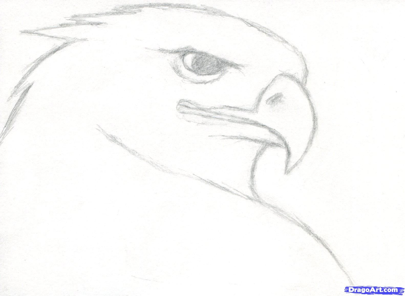 How to draw a realistic eagle golden eagle step 3
