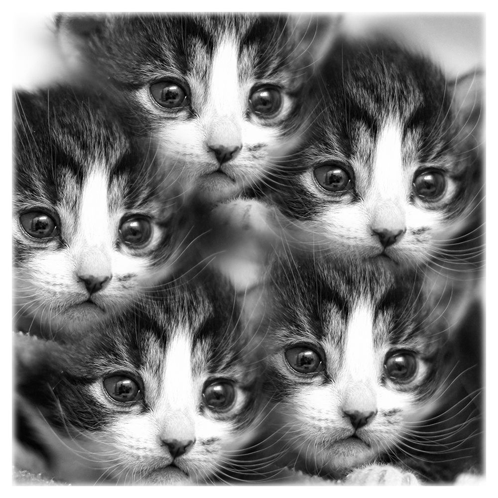 Kitten Kaleidoscope Three 3 Week Old Kittens Were Brought To The Rescue Centre With Their Mother A Stray While I Was There Yester Cats Crazy Cats Cute Cats