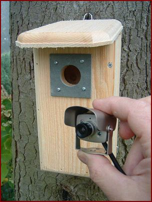 Backyard Wildlife Camera Wildlife Sanctuary Info