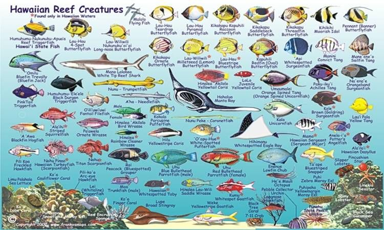 Coral reef animals names hawaiian coral fish under the for Ocean fish names