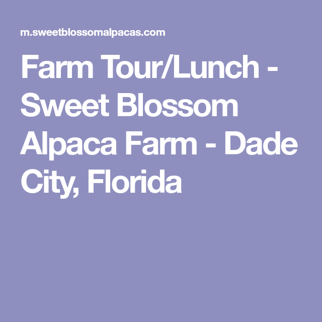 Farm Tour Lunch Sweet Blossom Alpaca Farm Dade City Florida Farm Tour Alpaca Farm Sweet Blossom
