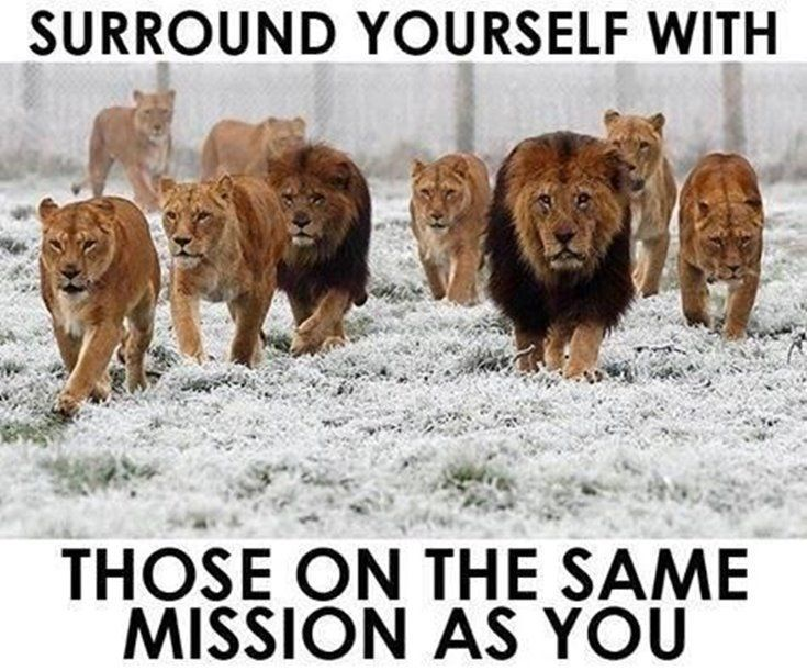 577 Motivational Inspirational Quotes About Life 12 Inspirational Quotes Lion Quotes Motivational Quotes