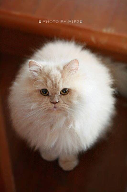 I am not fat ... I am just fluffy.