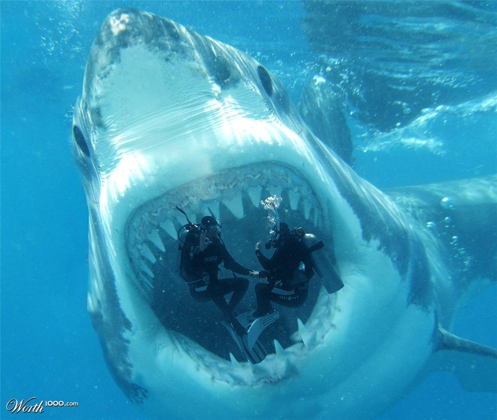 Megalodon by spidermonkey requin pinterest requins - Requin rigolo ...
