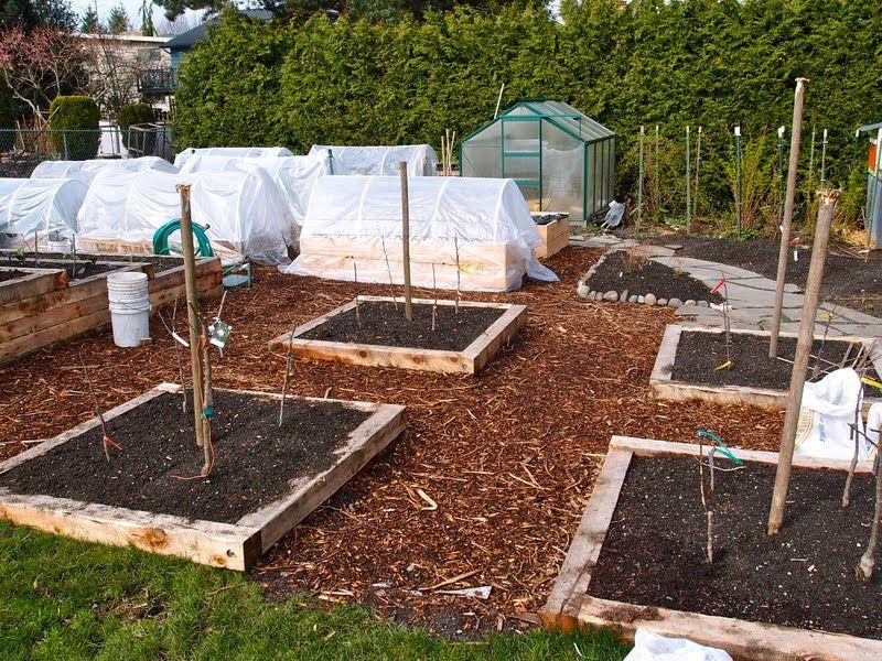 backyard tropical fruit landscapinng plans Backyard Orchard