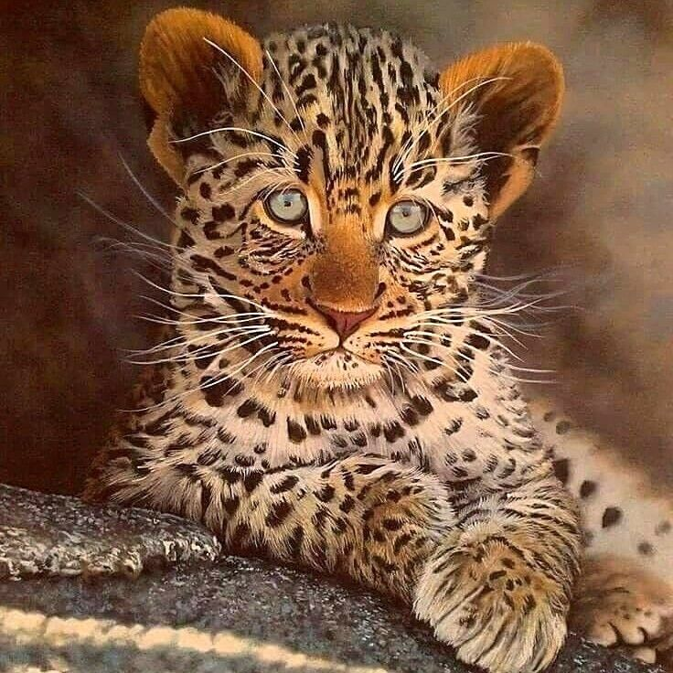 Pin by michael lo on big wild cats with images baby