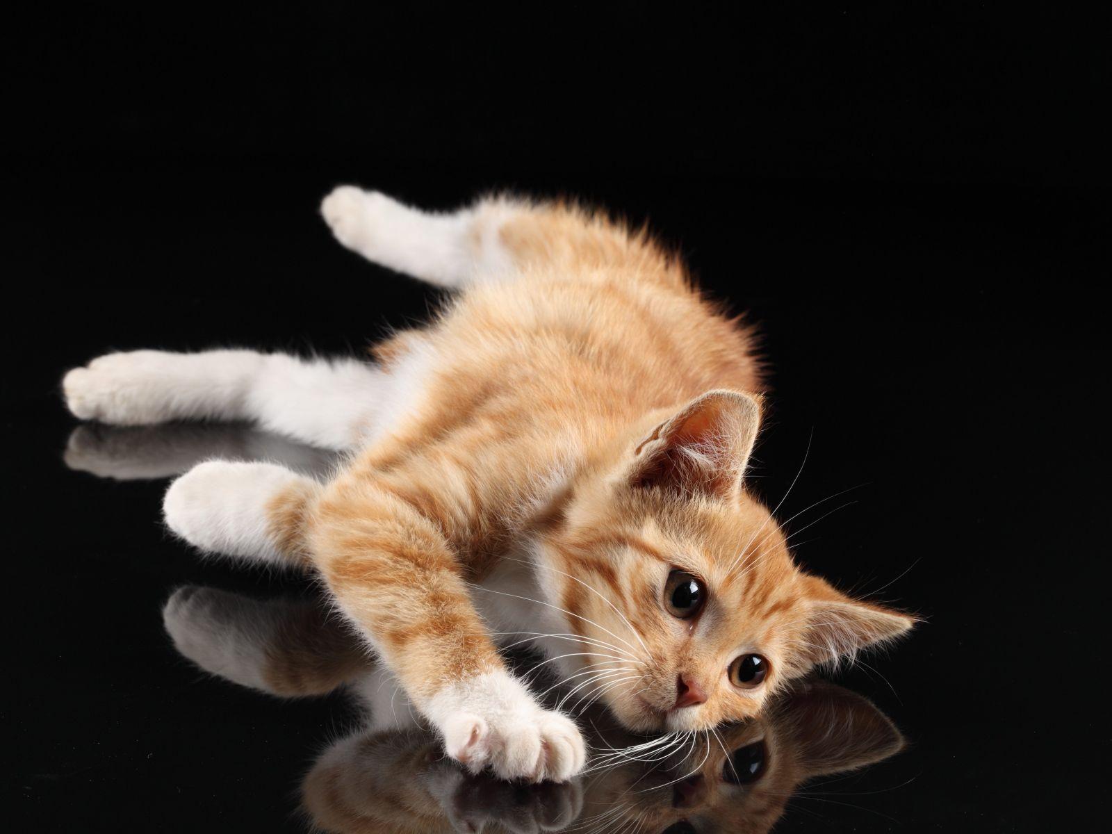 Wallpaper kitten lie reflection