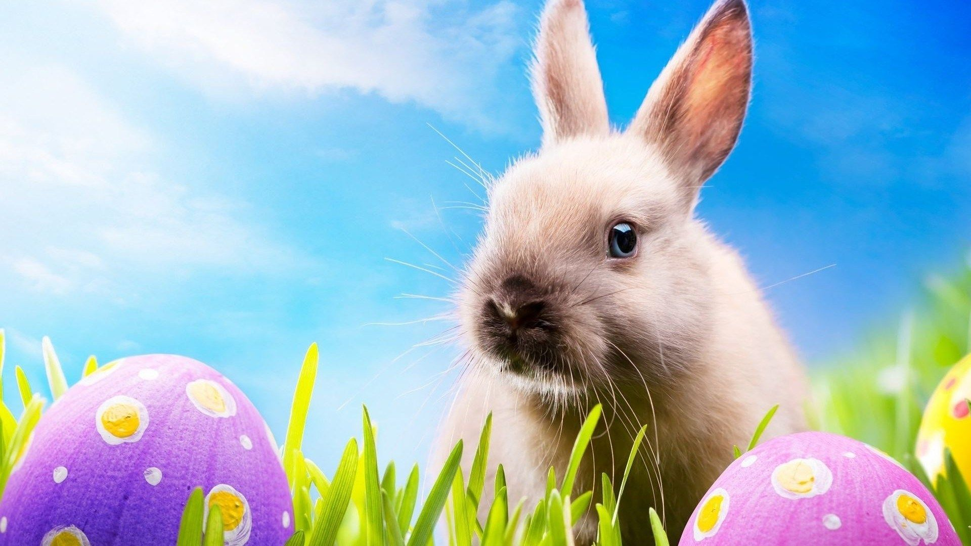 Easter Bunny Desktop Wallpaper 1080p Funny Easter Bunny Easter Wallpaper Easter Bunny Images