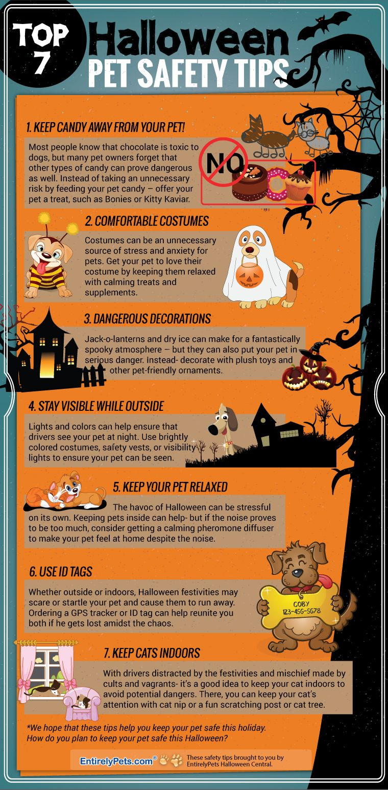 Top 7 Halloween Pet Safety Tips EntirelyPets Halloween