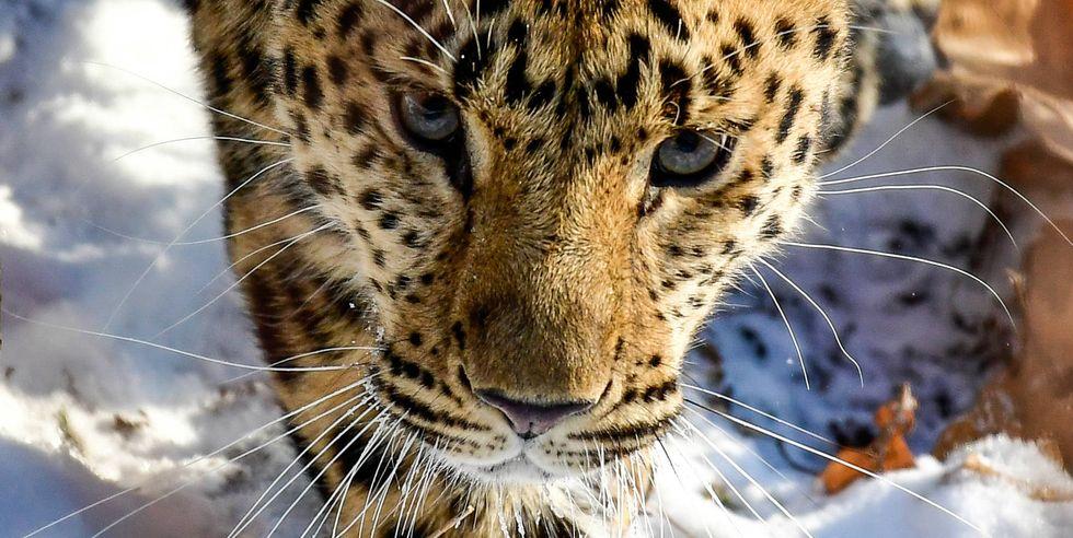 24 Amazing Animals That Are Almost Extinct Animals