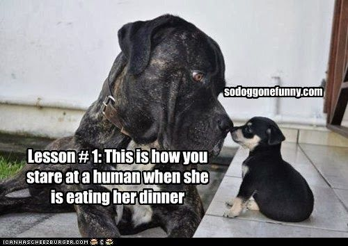 So Doggone Funny 14354 Puppy Is Taught A Very Important Lesson