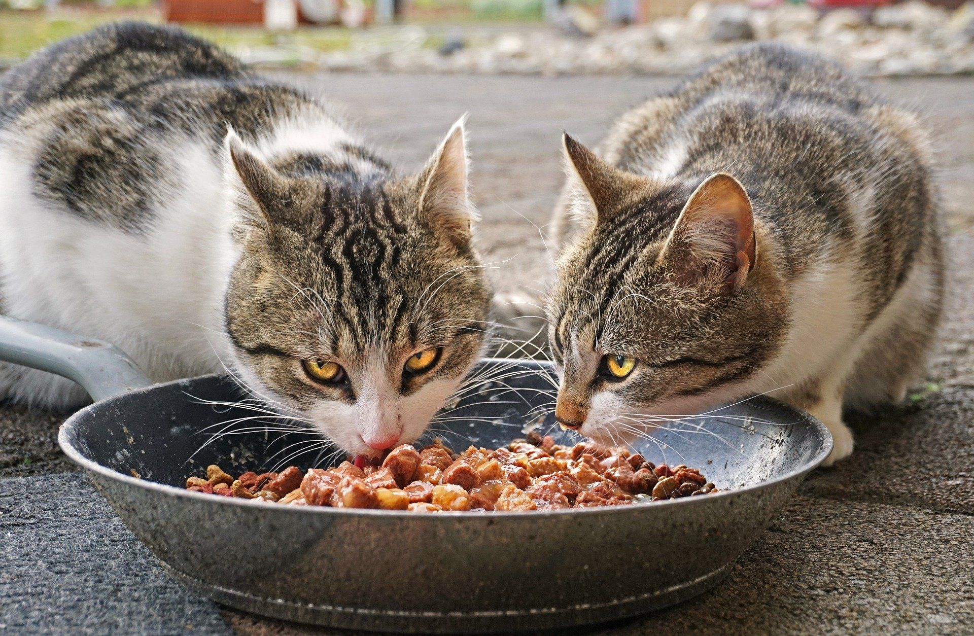 Choosing The Best Food For Your Cat In 2020 Raw Cat Food Recipes Healthy Cat Food Canned Cat Food