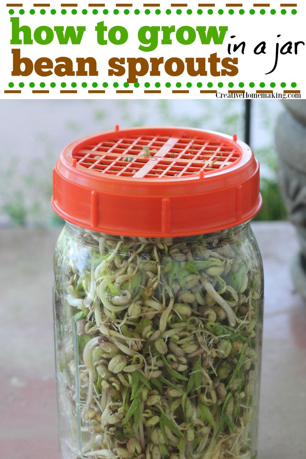 Growing Bean Sprouts in a Jar Growing beans, Growing