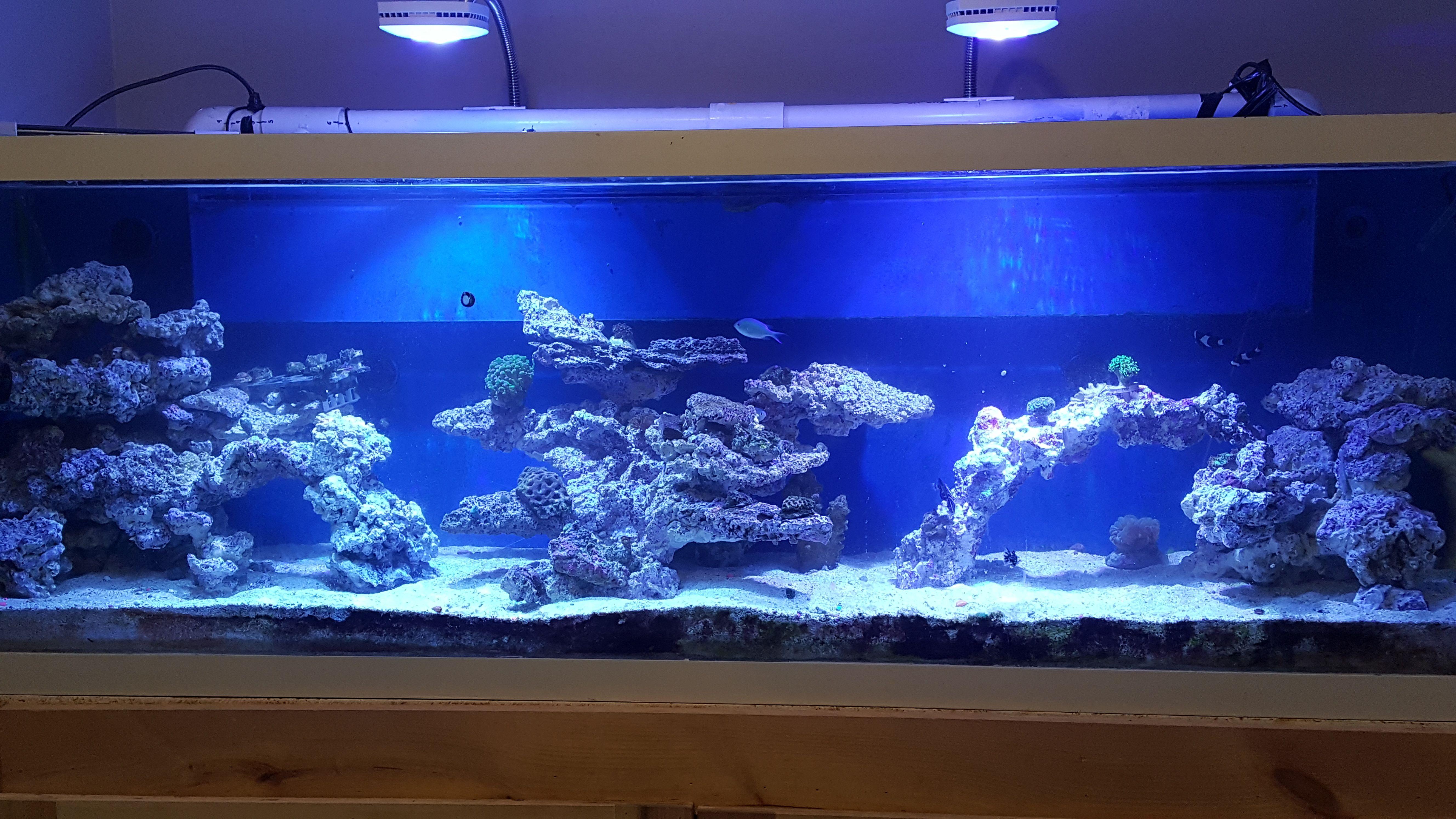 aaf8d88816a554214f2f663831fd18d4 Frais De Aquarium 450 Litres Des Idées