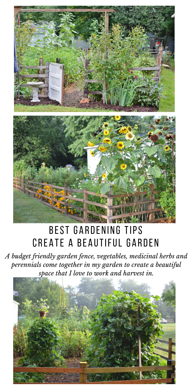 Best Gardening Tips To Create A Beautiful Vegetable Garden 640 x 480