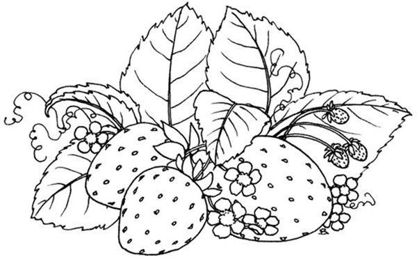 morangos para pintar-desenhos para colorir | EMBROIDERY and STENCILS ...