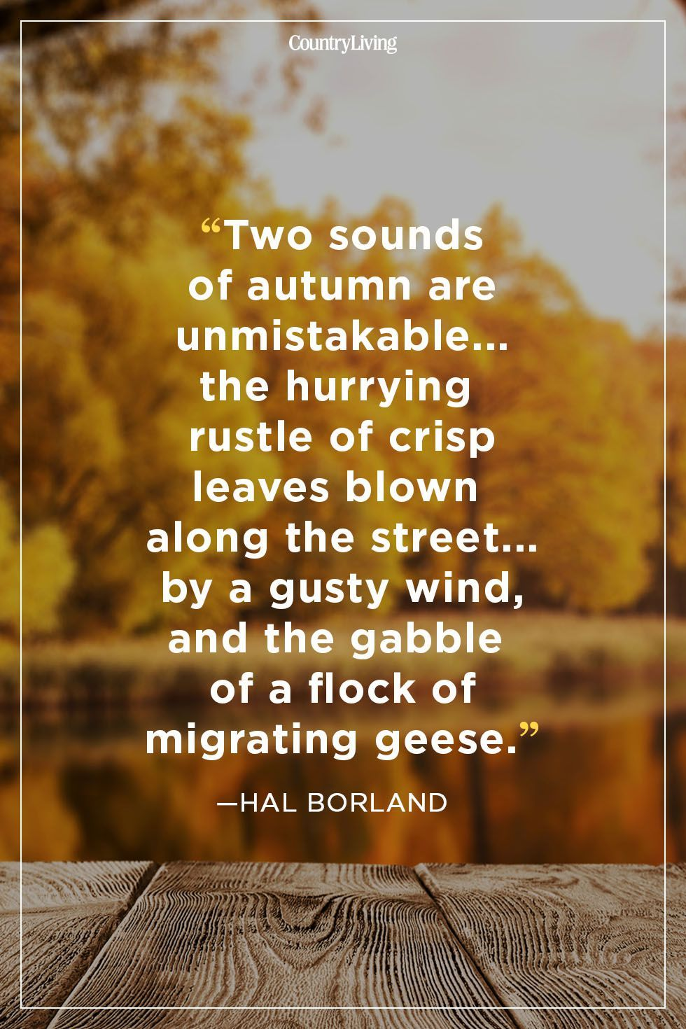 52 Fall Quotes to Remind You Just How Beautiful This