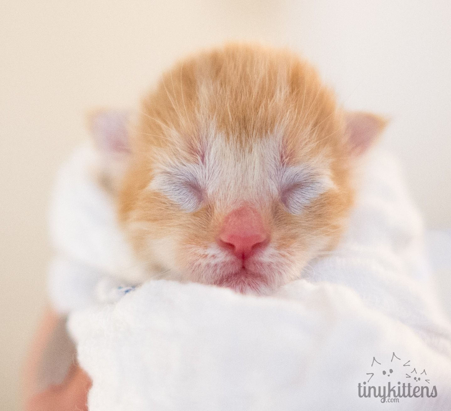 "Tinykittens on 28 Apr 2015 ""Introducing Otto Otto"