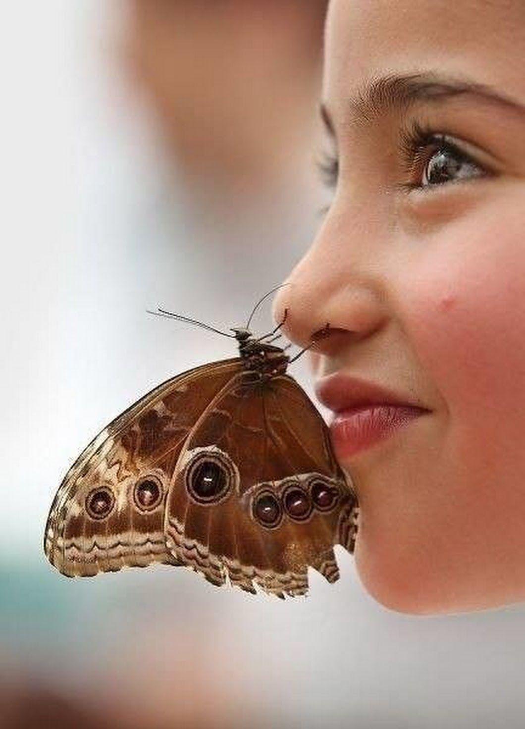 Картинки бабочки смешные, днем