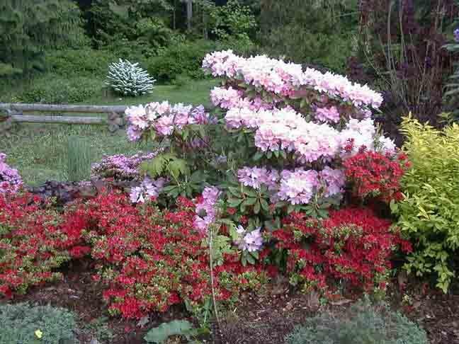 my Robinson Garden