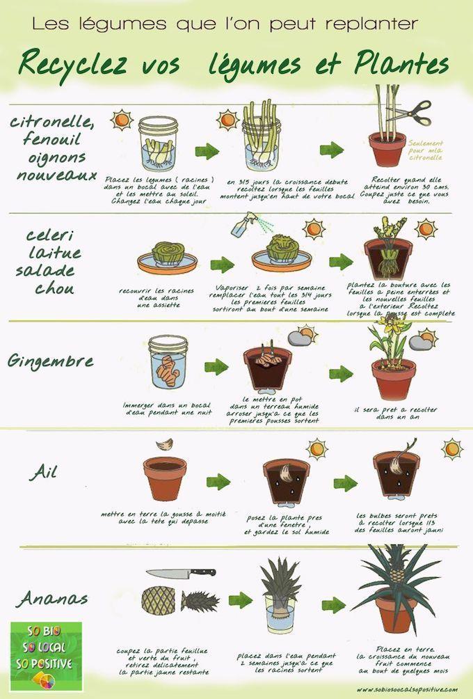 Jardiner en appartement : potager intérieur et faire pousser des légumes