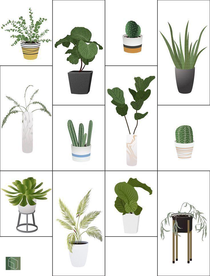 Vector Interior Plants Illustration Plant Illustration Interior Plants Architecture Collage