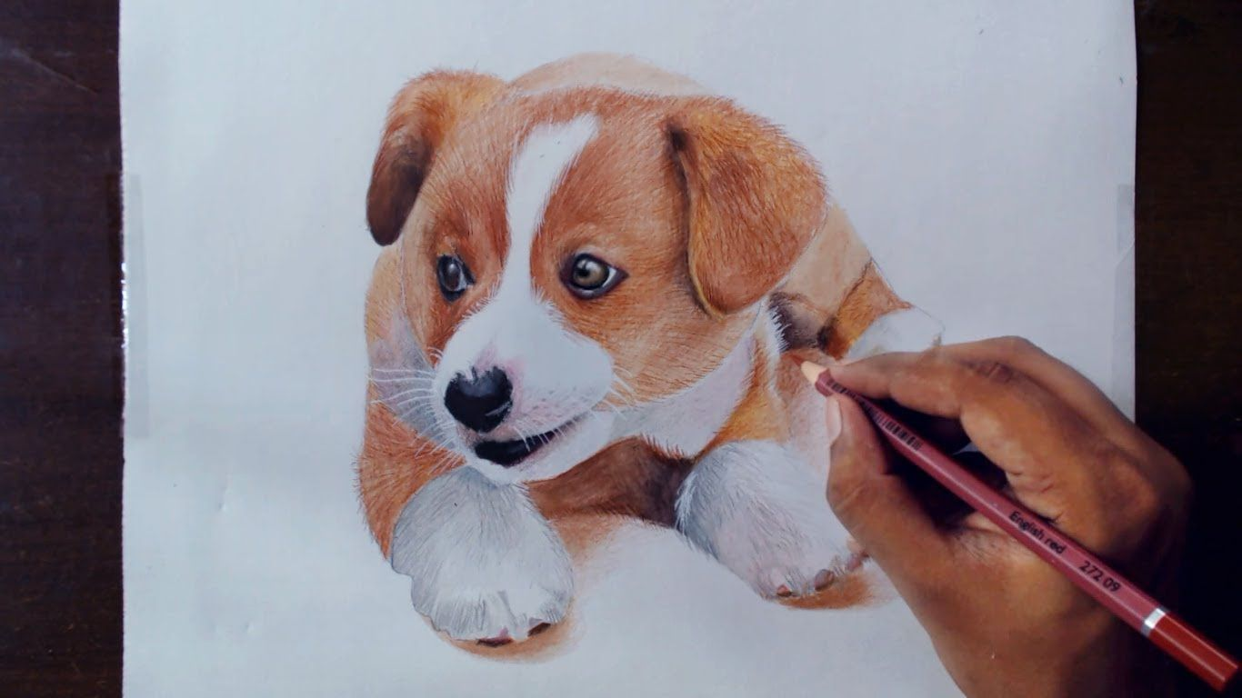 Drawing Animals 2 Drawing A Puppy Colored Pencils Animal