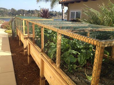 Raised Garden Bed With Hinged Wire Cover To Keep Critters | Edible