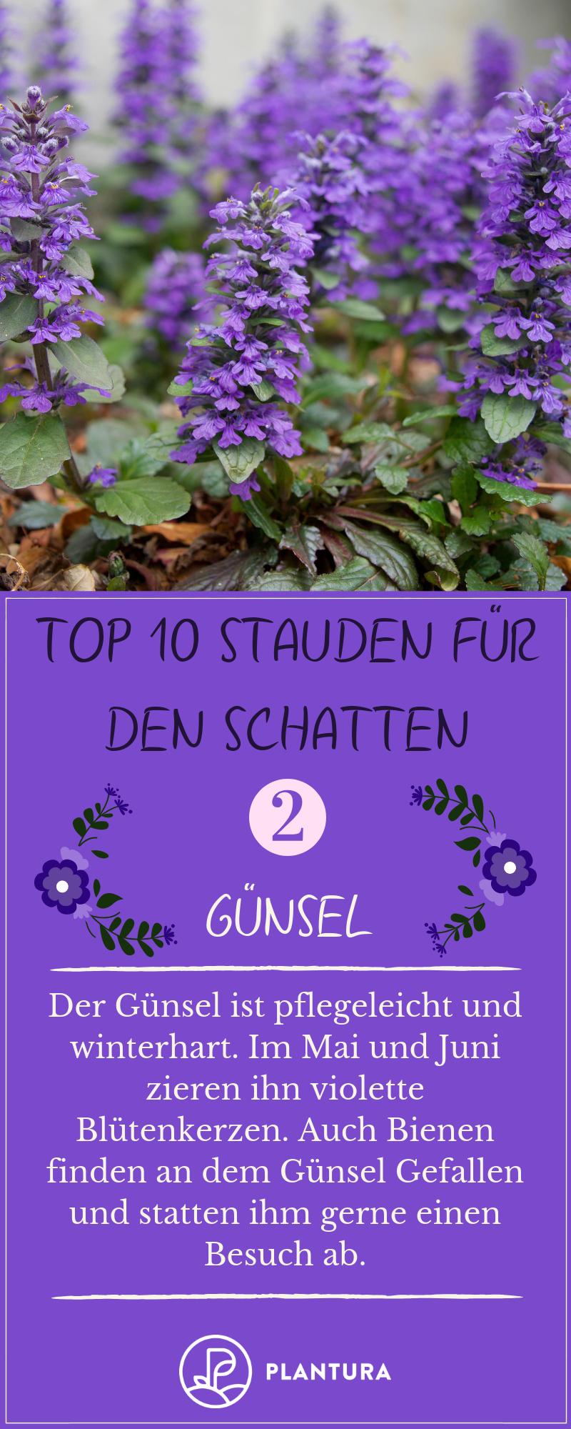 Photo of Stauden für den Schatten: Unsere Top 10 – Plantura