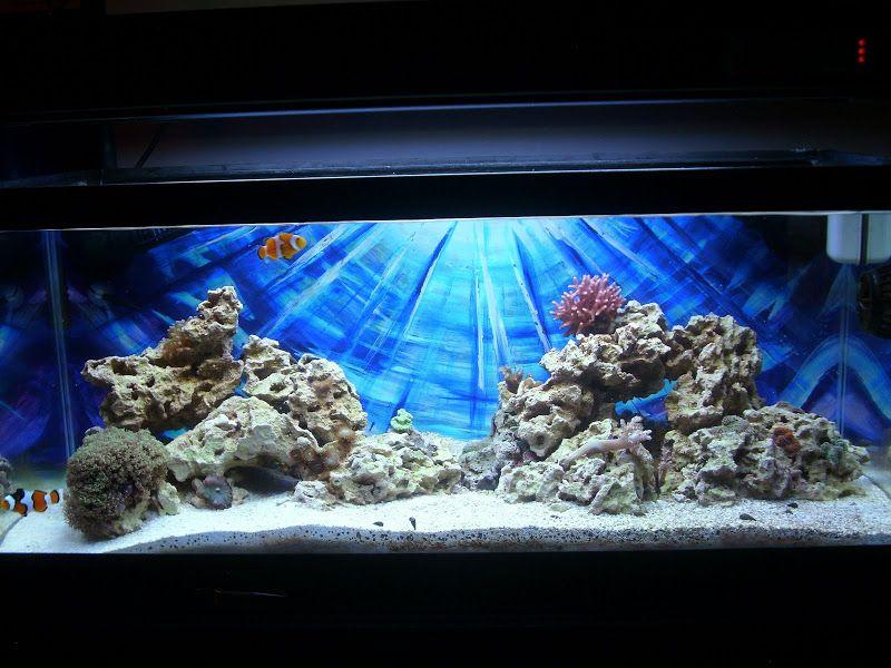 Новият% 20tank% 20009.JPG | Reef aquascaping, Aquascape ...