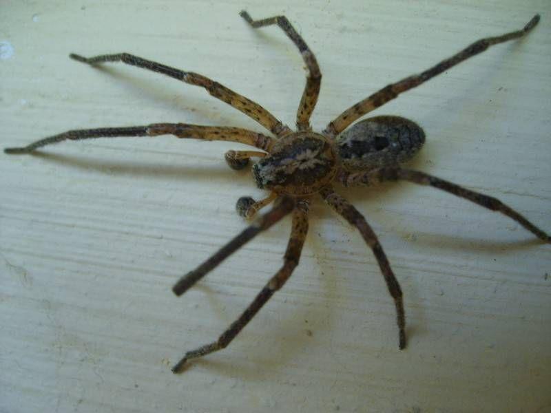 comment chasser naturellement les araign es de votre int rieur. Black Bedroom Furniture Sets. Home Design Ideas