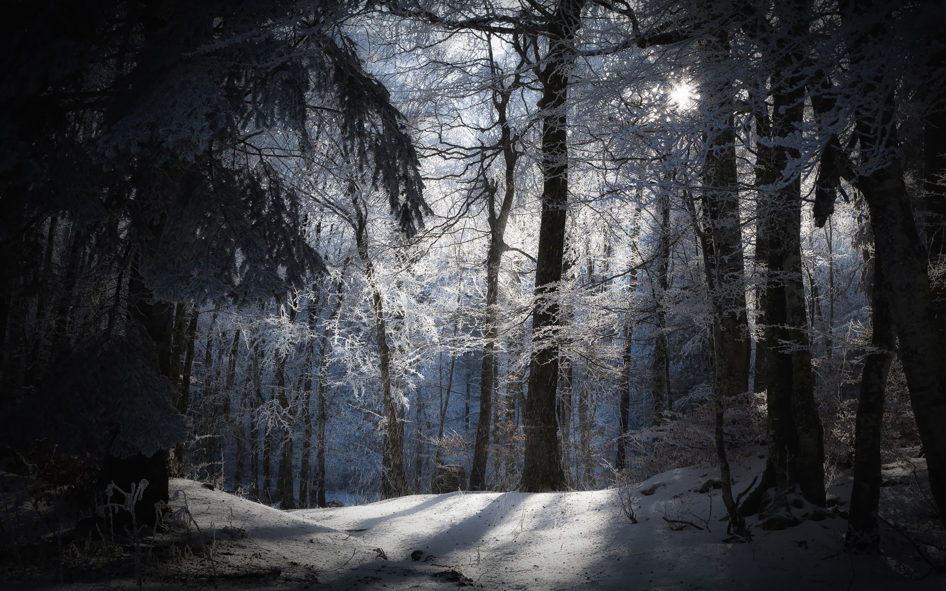 First snow over the autumn forest wallpaper Nature wallpapers