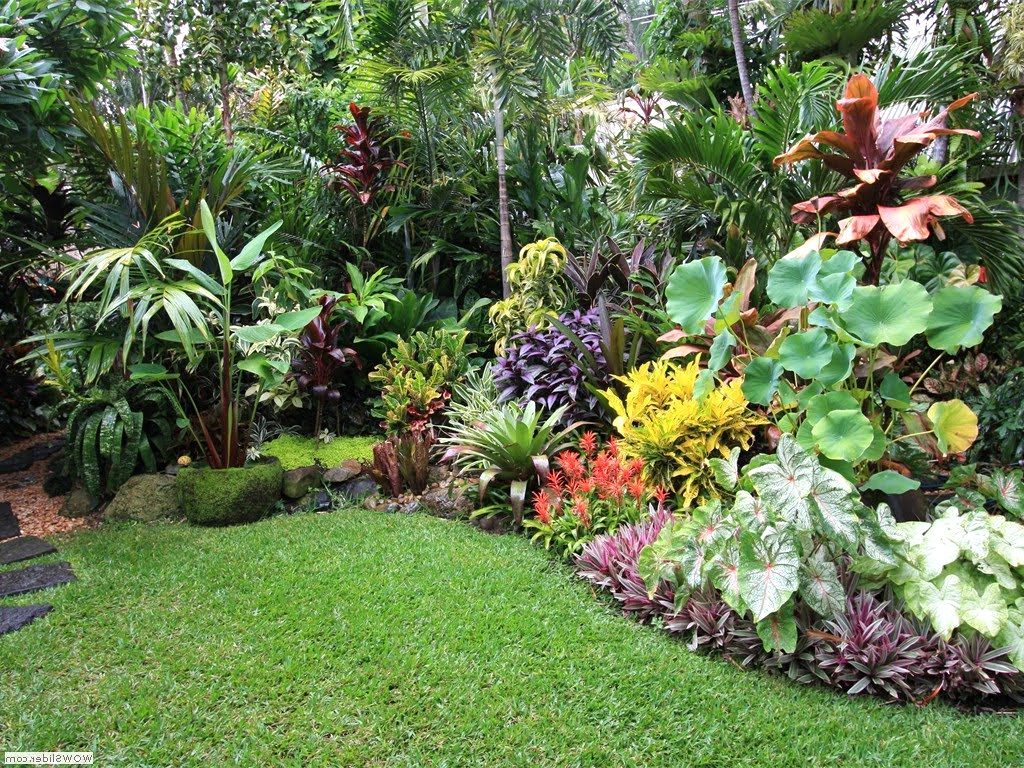 Small Tropical Garden Design Ideas Garden Tropical Garden ... on Small Tropical Backyard id=71332