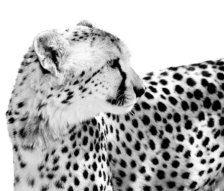 Black & White in Photography - Etsy Art
