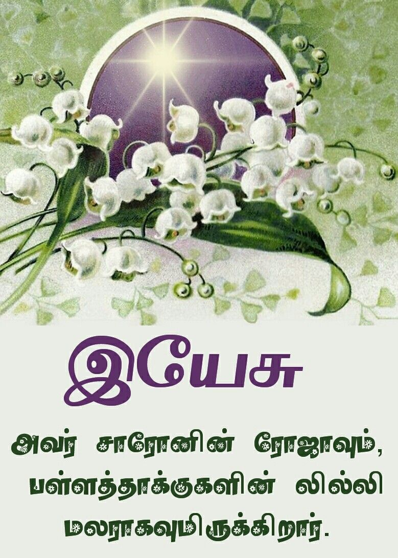 Pin by Tamil mani on Tamil Bible Verse Wallpapers Lily