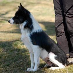 Adopt Skyye On Border Collie Collie Dog Photos