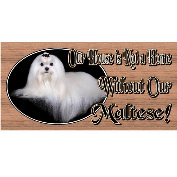 Maltese Dog Plaque Gs486 By Gigglesticksplaques On Etsy 5 99