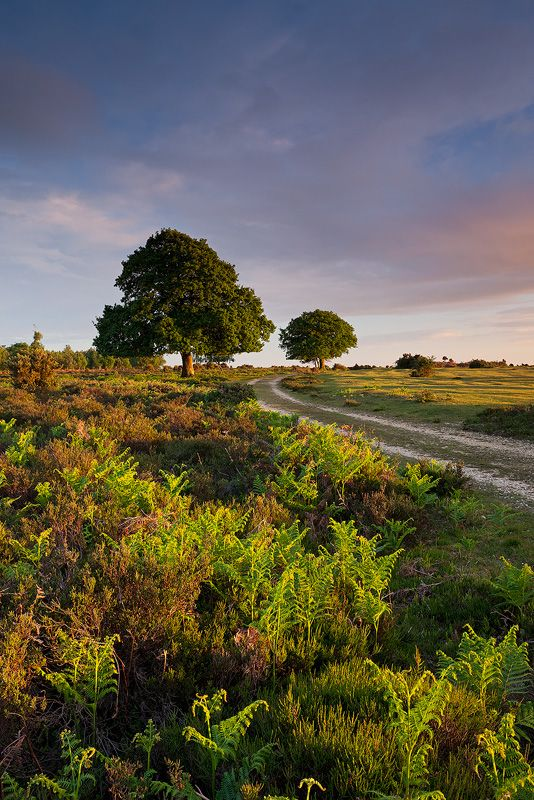 New Forest Hampshire New Forest England New Forest British Countryside