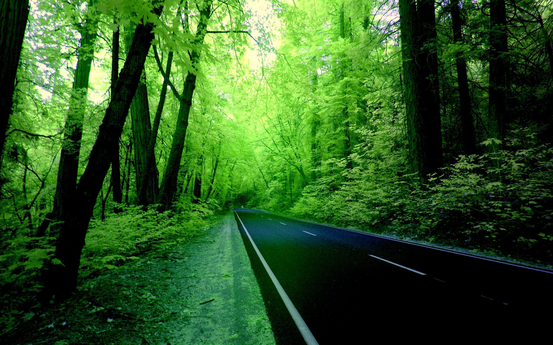 The Green Road Hd Wallpaper Desktop Background Nature Nature Desktop Greenery Wallpaper